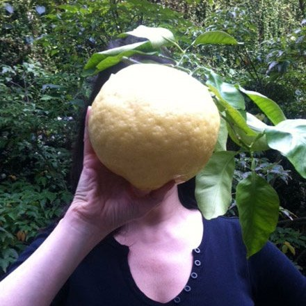Giant Lemon